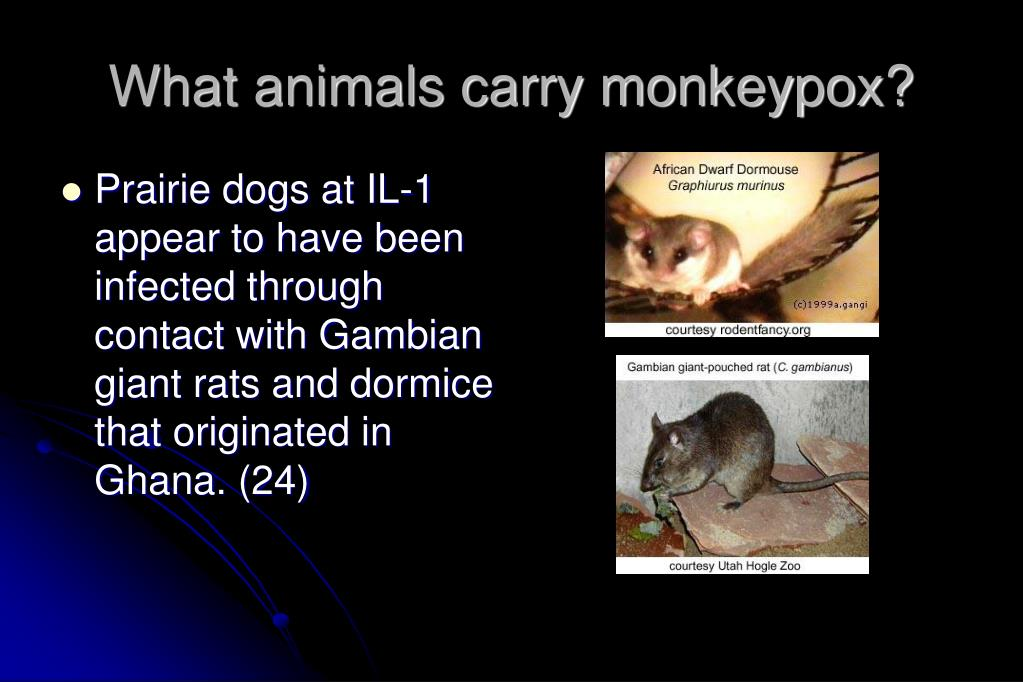 What animals carry monkeypox?