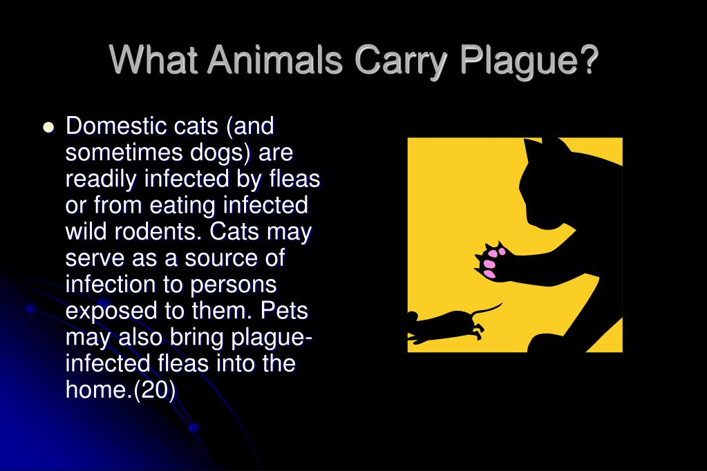 What Animals Carry Plague?