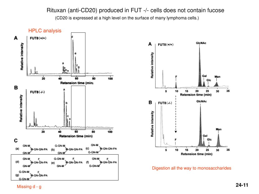 Rituxan (anti-CD20) produced in FUT -/- cells does not contain fucose