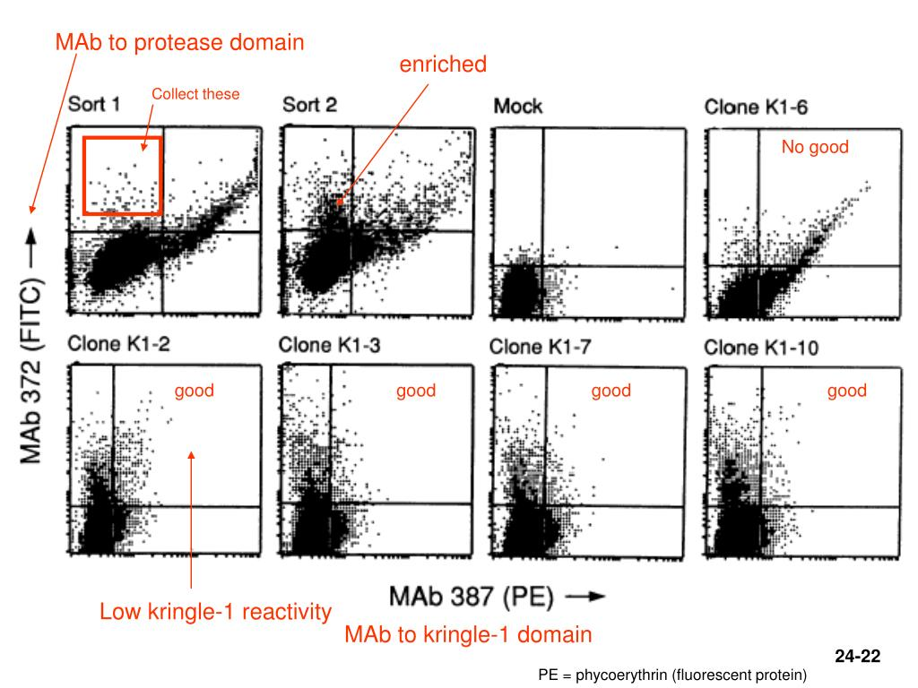 MAb to protease domain