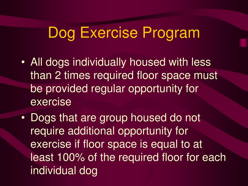 Dog Exercise Program