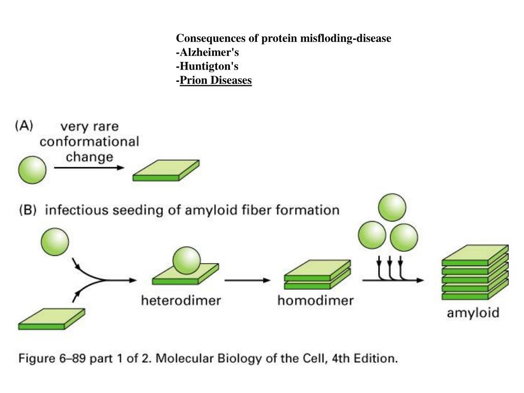 Consequences of protein misfloding-disease
