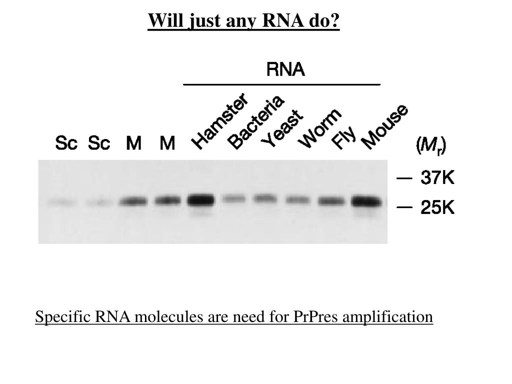 Will just any RNA do?