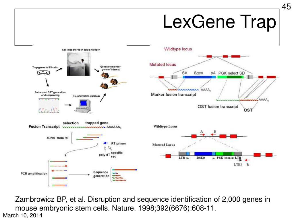 LexGene Trap