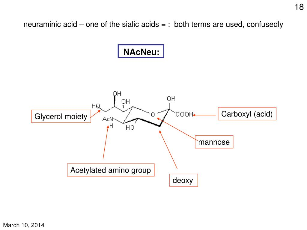 neuraminic acid – one of the sialic acids = :  both terms are used, confusedly
