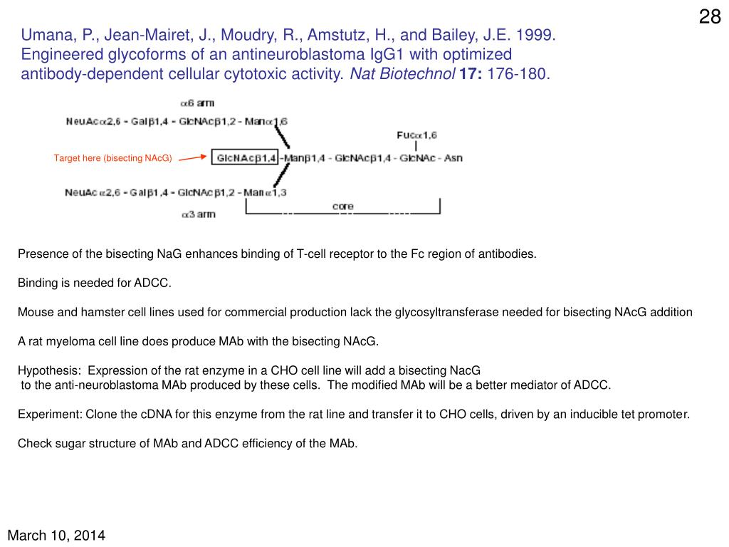 Umana, P., Jean-Mairet, J., Moudry, R., Amstutz, H., and Bailey, J.E. 1999.