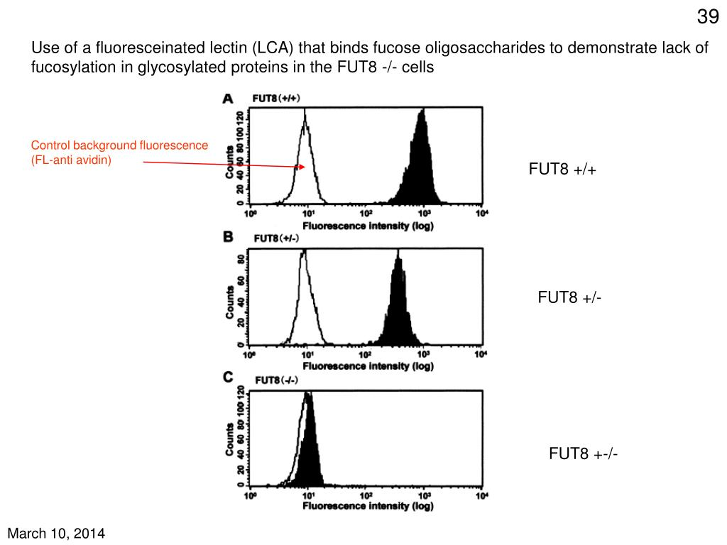 Use of a fluoresceinated lectin (LCA) that binds fucose oligosaccharides to demonstrate lack of