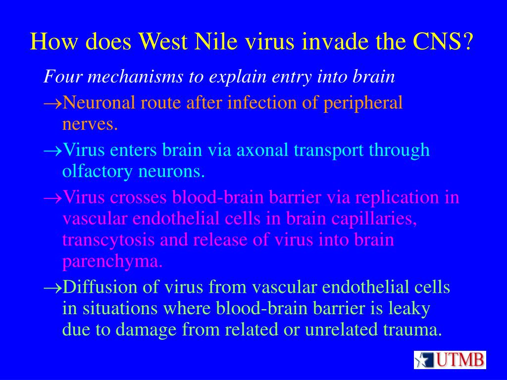 How does West Nile virus invade the CNS?