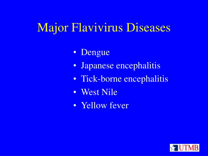 Major flavivirus diseases l.jpg