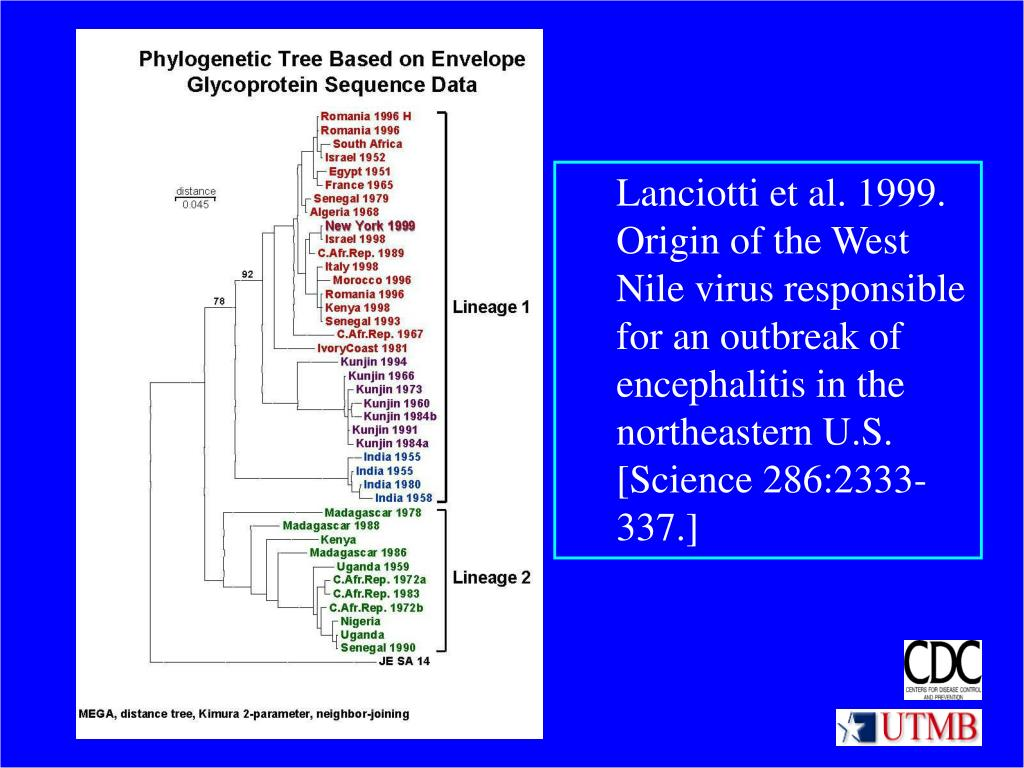 Lanciotti et al. 1999. Origin of the West Nile virus responsible for an outbreak of encephalitis in the northeastern U.S. [Science 286:2333-337.]