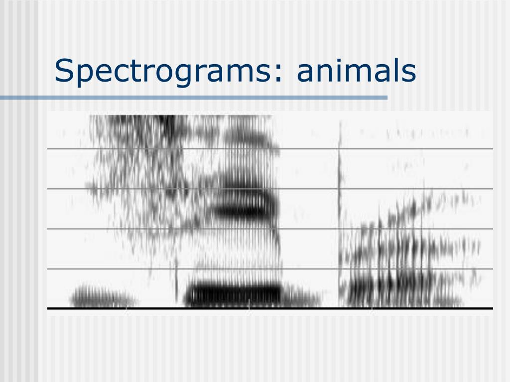 Spectrograms: animals