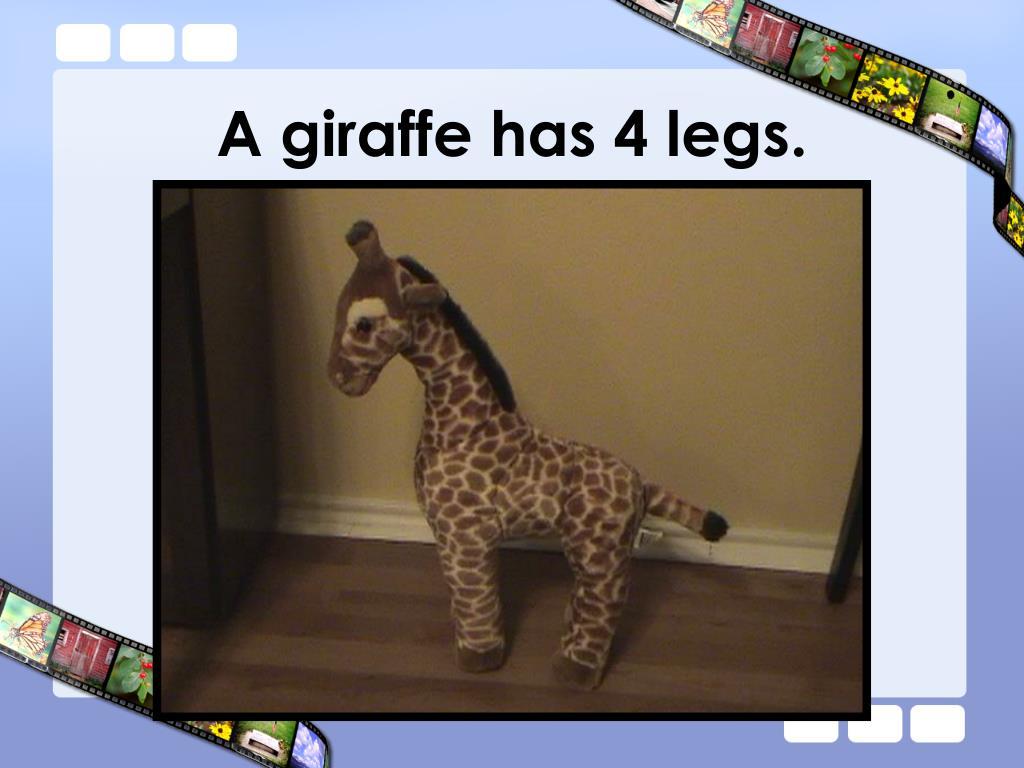 A giraffe has 4 legs.