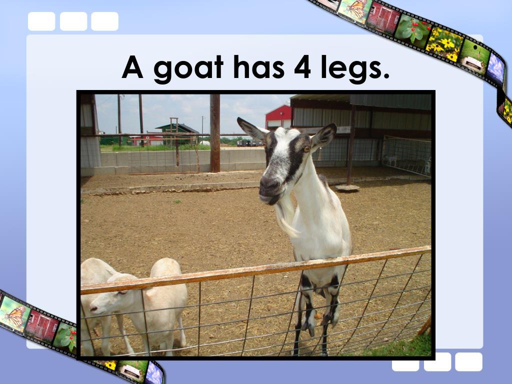 A goat has 4 legs.