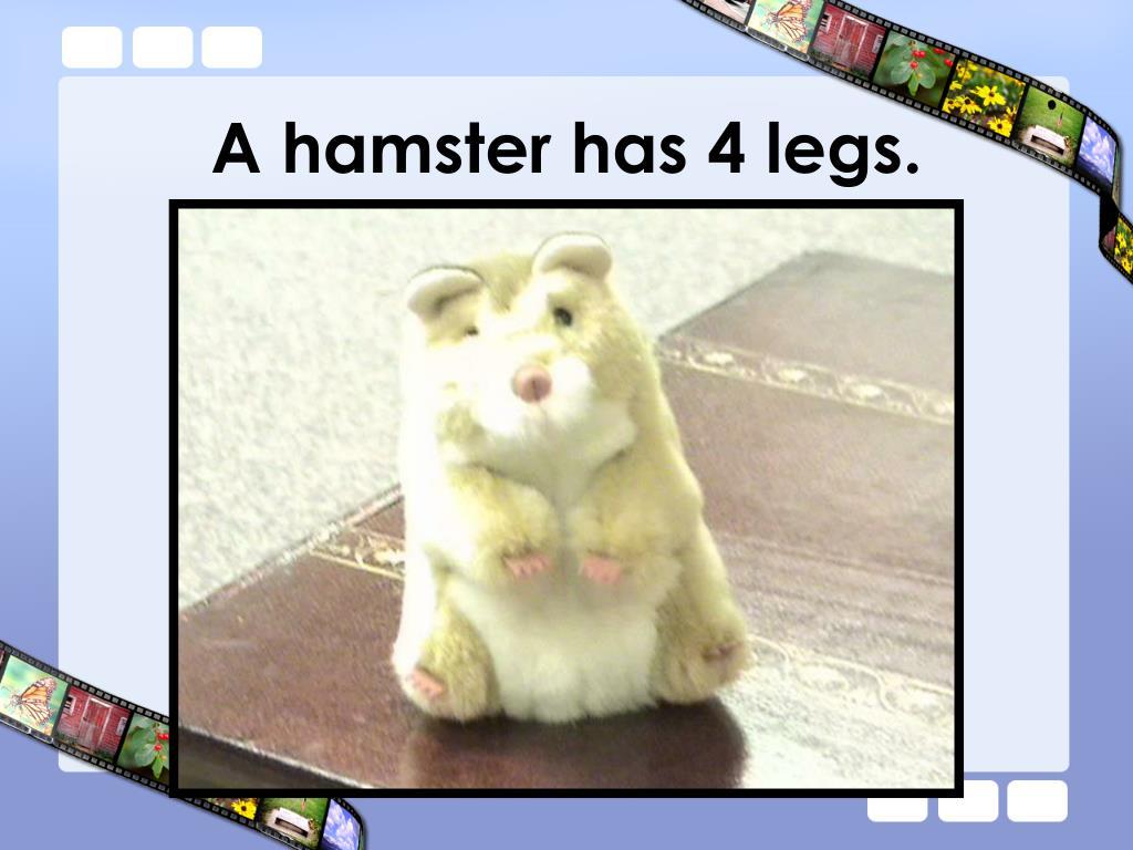 A hamster has 4 legs.