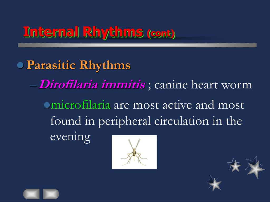 Internal Rhythms