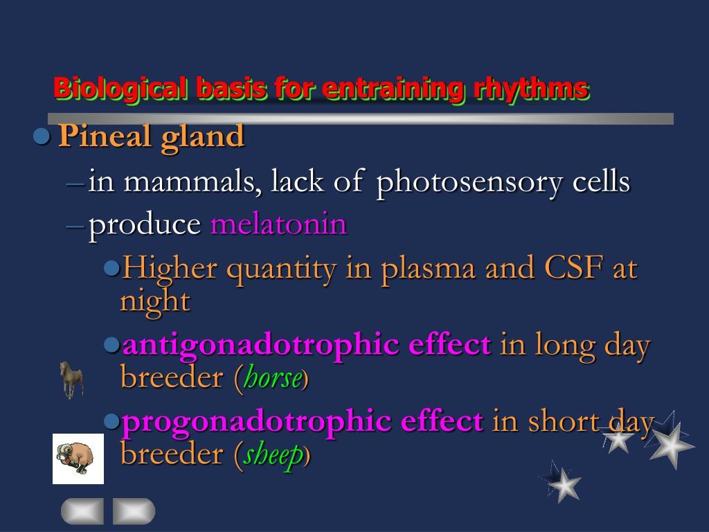 Biological basis for entraining rhythms
