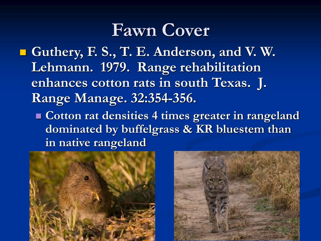 Fawn Cover