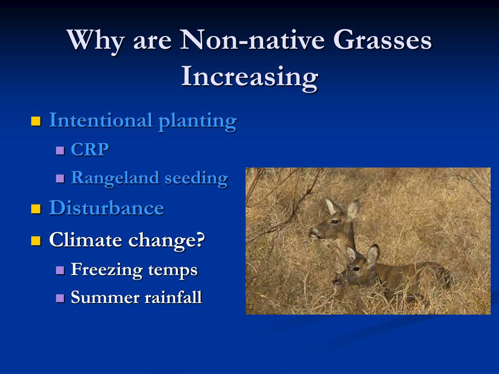 Why are Non-native Grasses Increasing