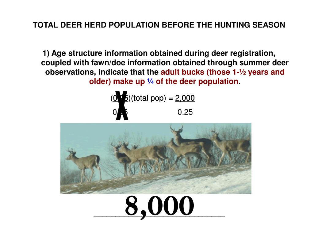 TOTAL DEER HERD POPULATION BEFORE THE HUNTING SEASON