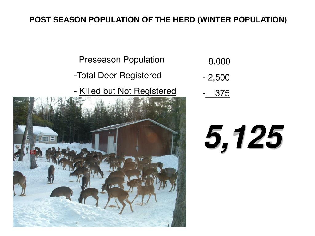 POST SEASON POPULATION OF THE HERD (WINTER POPULATION)