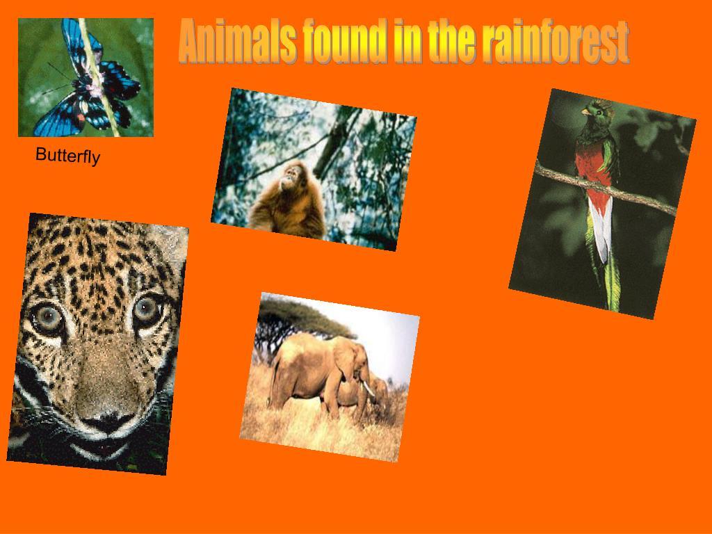 Animals found in the rainforest