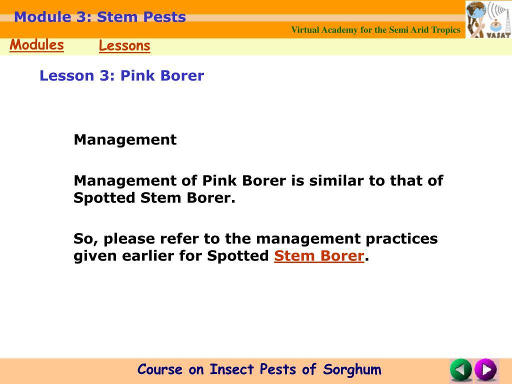 Lesson 3: Pink Borer