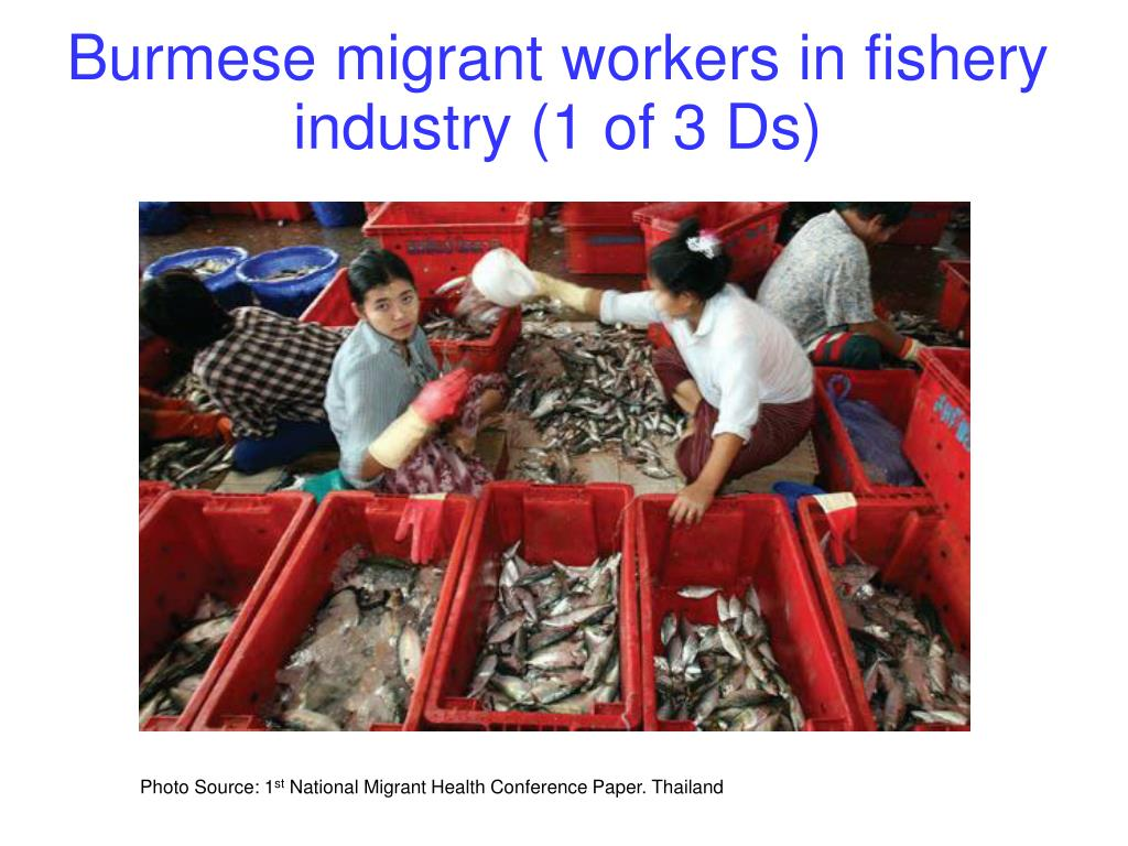 Burmese migrant workers in fishery industry (1 of 3 Ds)