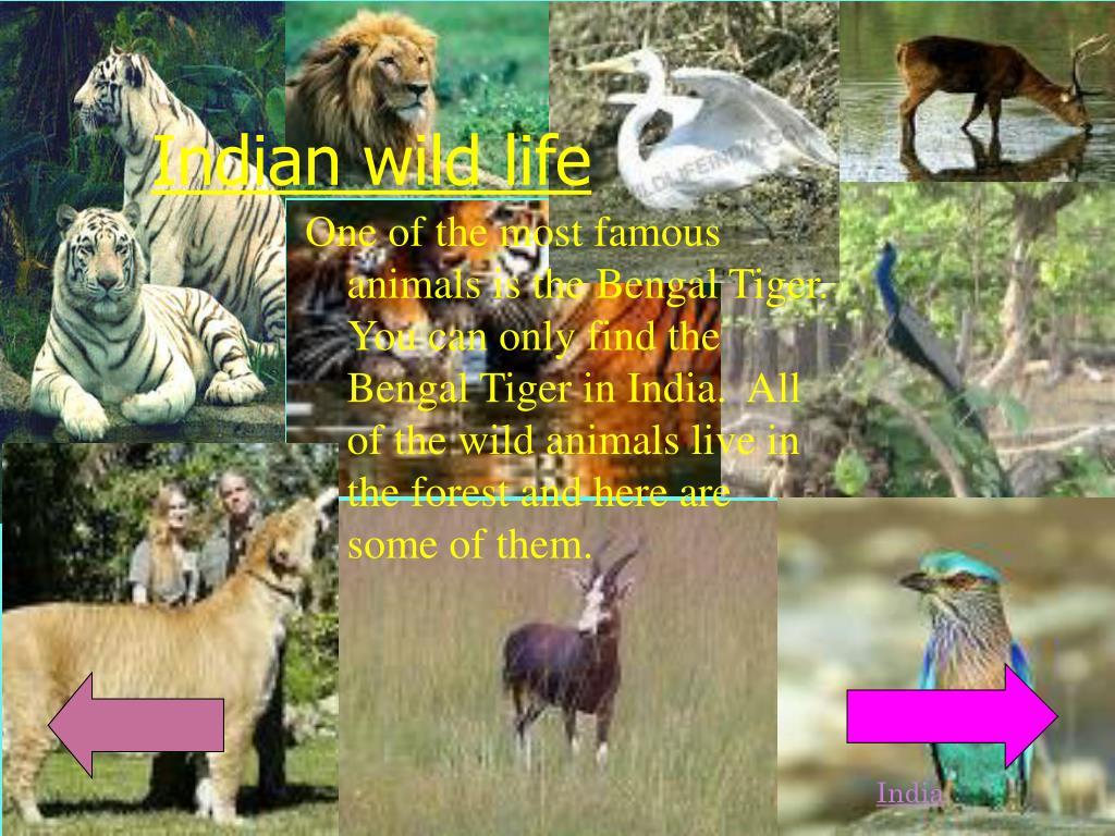 Indian wild life