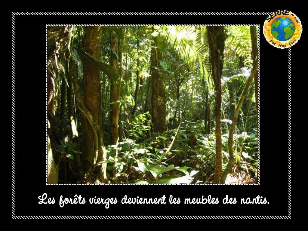 Les forêts vierges deviennent les meubles des nantis,