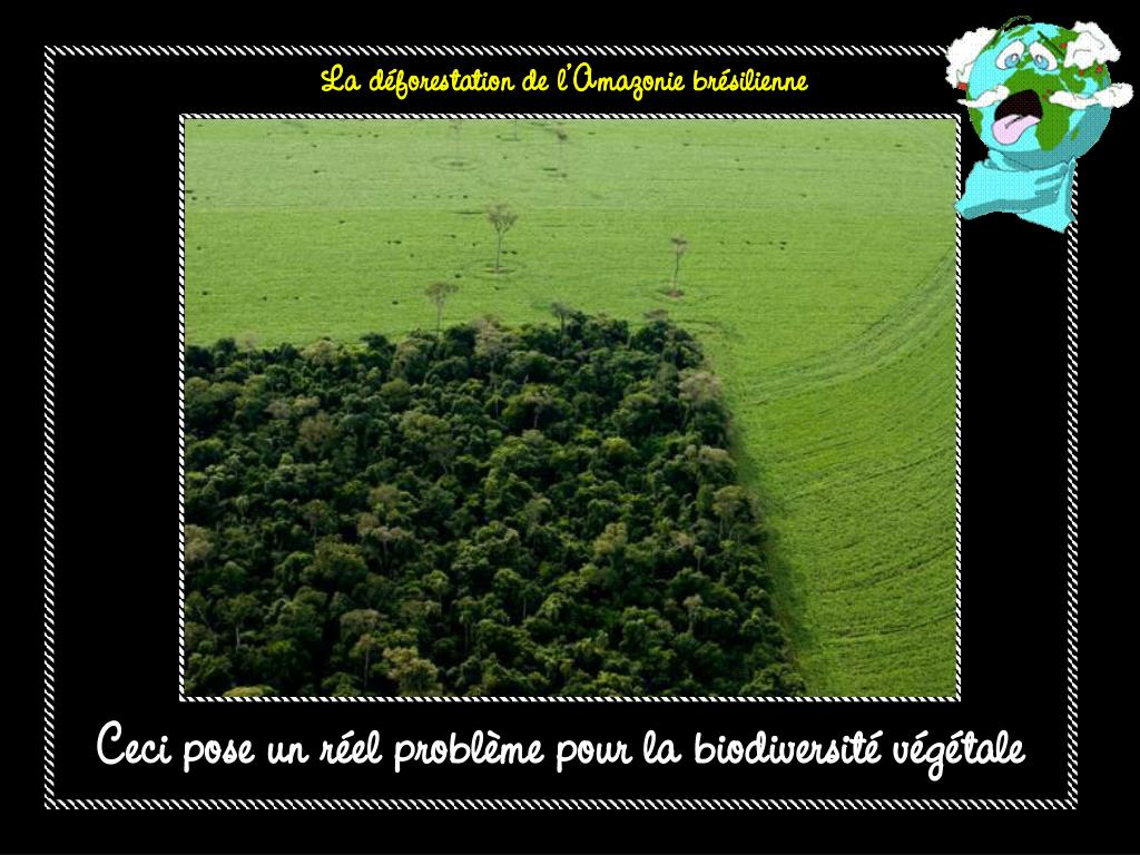 La déforestation de l'Amazonie brésilienne