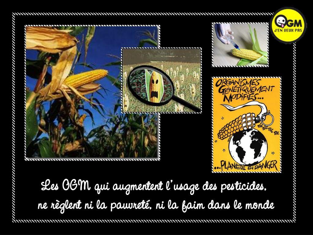 Les OGM qui augmentent l'usage des pesticides,