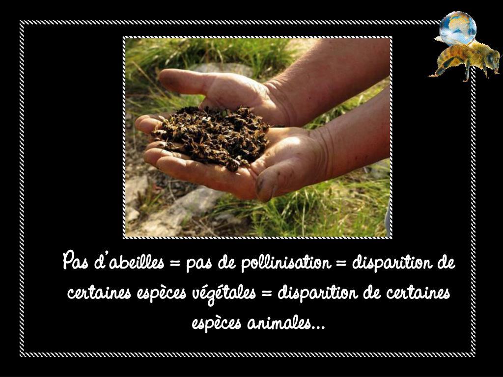 Pas d'abeilles = pas de pollinisation = disparition de certaines espèces végétales = disparition de certaines espèces animales…