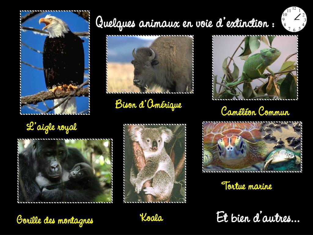Quelques animaux en voie d'extinction :