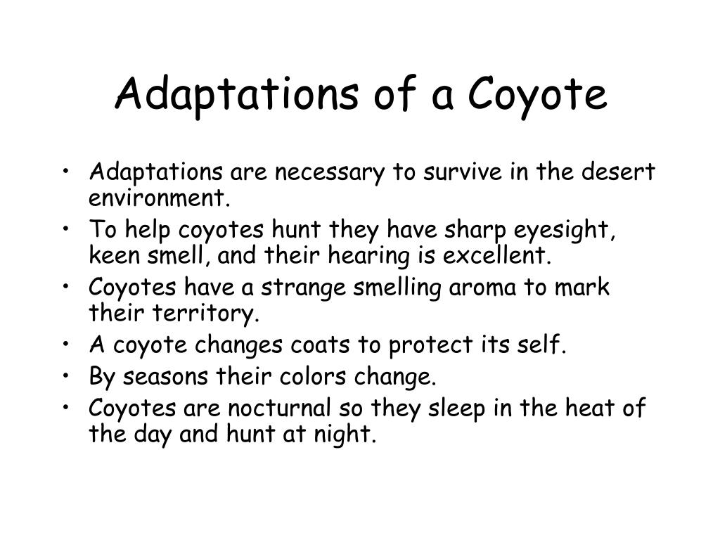 Adaptations of a Coyote