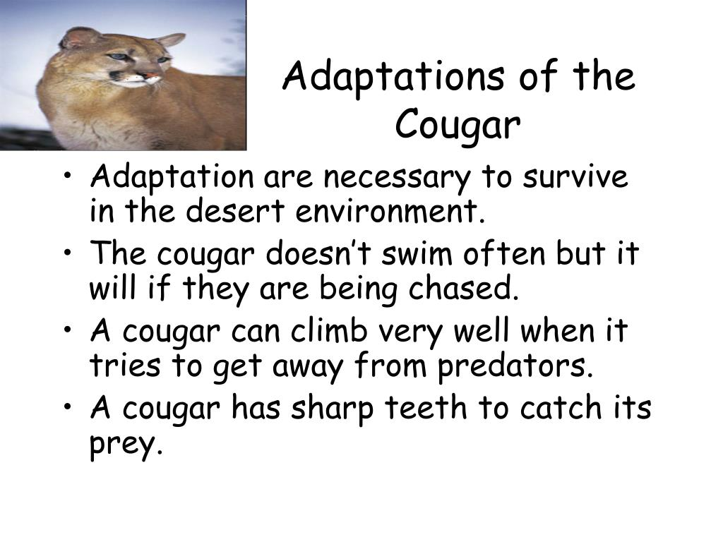 Adaptations of the Cougar