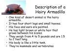 description of a hairy armadillo