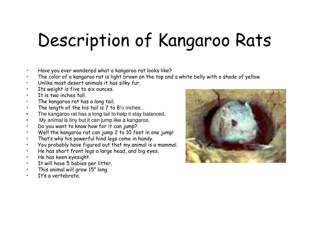 Description of Kangaroo Rats