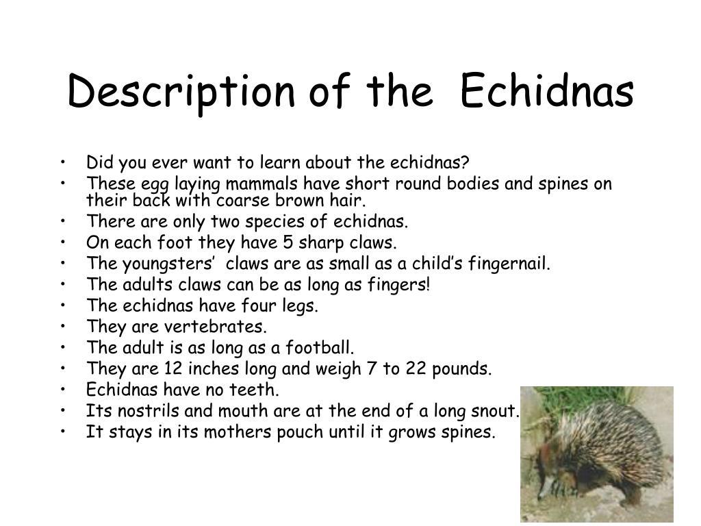 Description of the  Echidnas