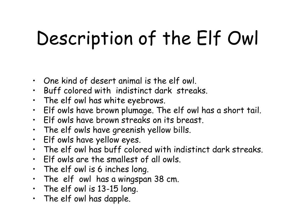 Description of the Elf Owl