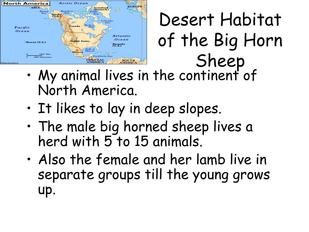 Desert Habitat of the Big Horn Sheep