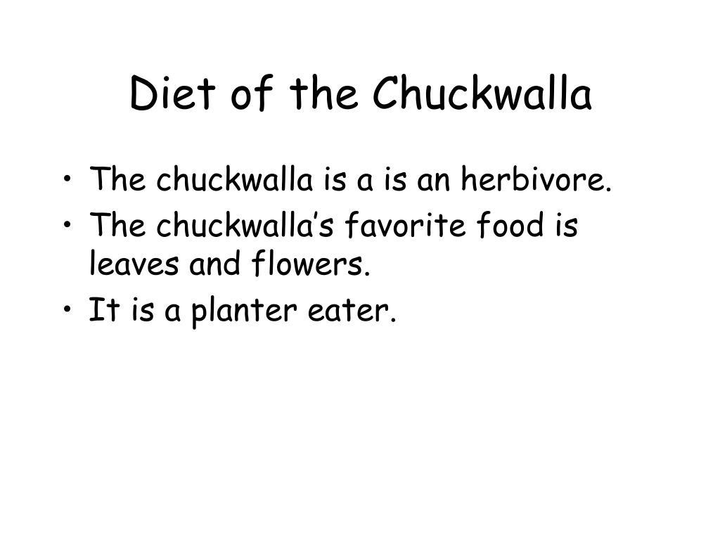 Diet of the Chuckwalla