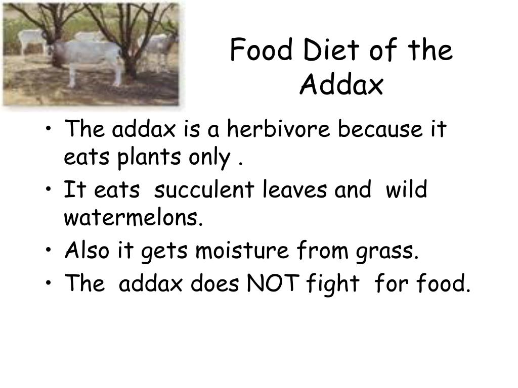 Food Diet of the Addax