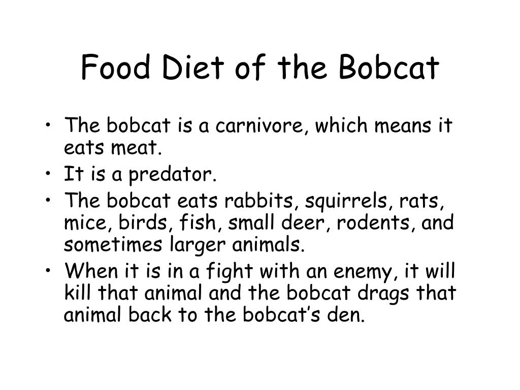 Food Diet of the Bobcat