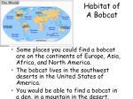 habitat of a bobcat