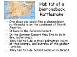habitat of a diamondback rattlesnake