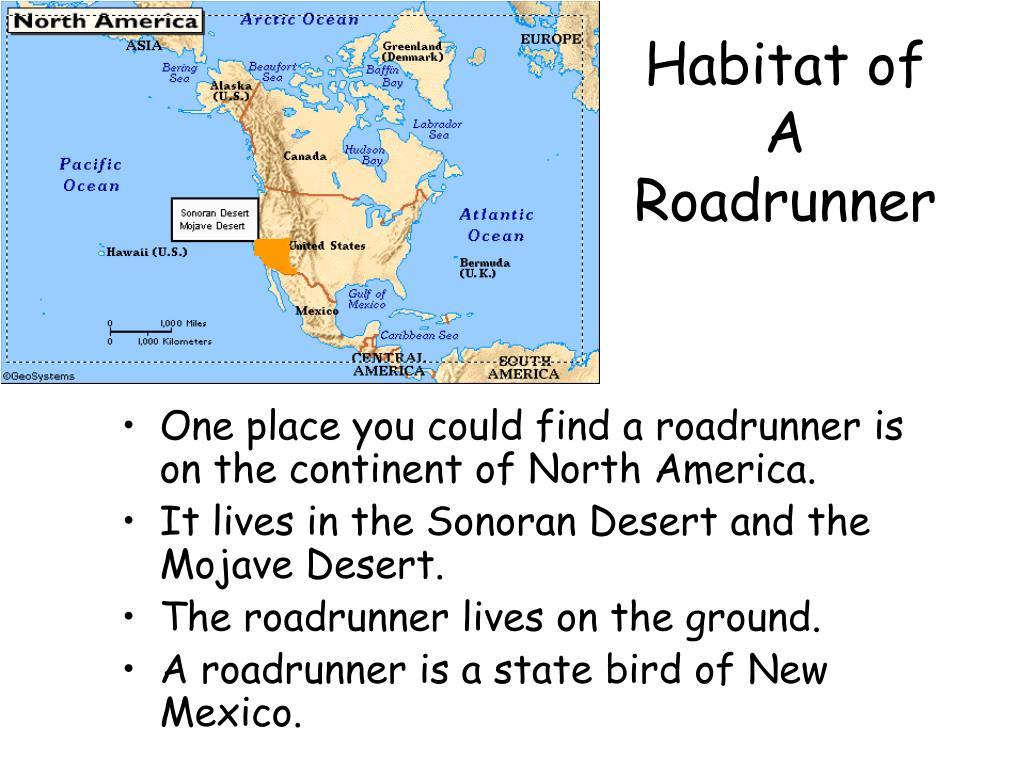 Habitat of A Roadrunner
