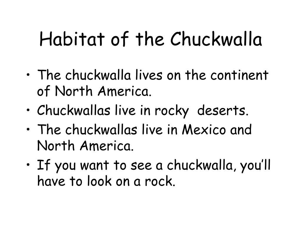 Habitat of the Chuckwalla