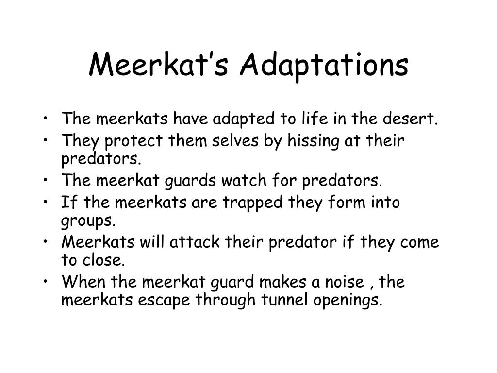 Meerkat's Adaptations