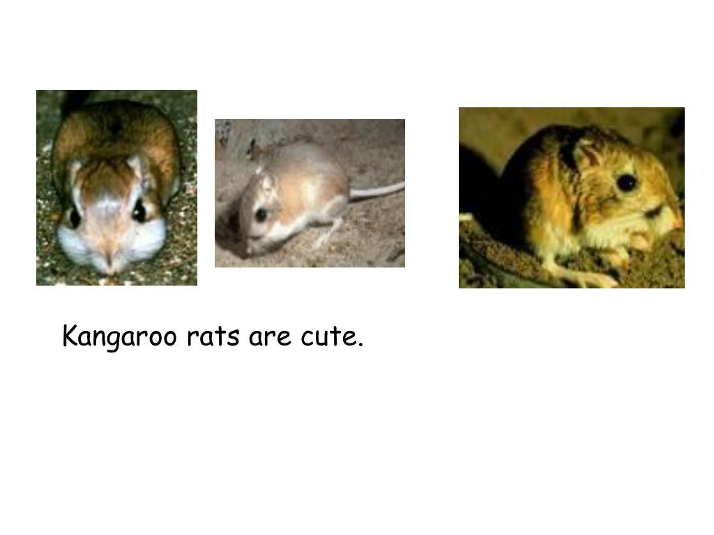 Kangaroo rats are cute.