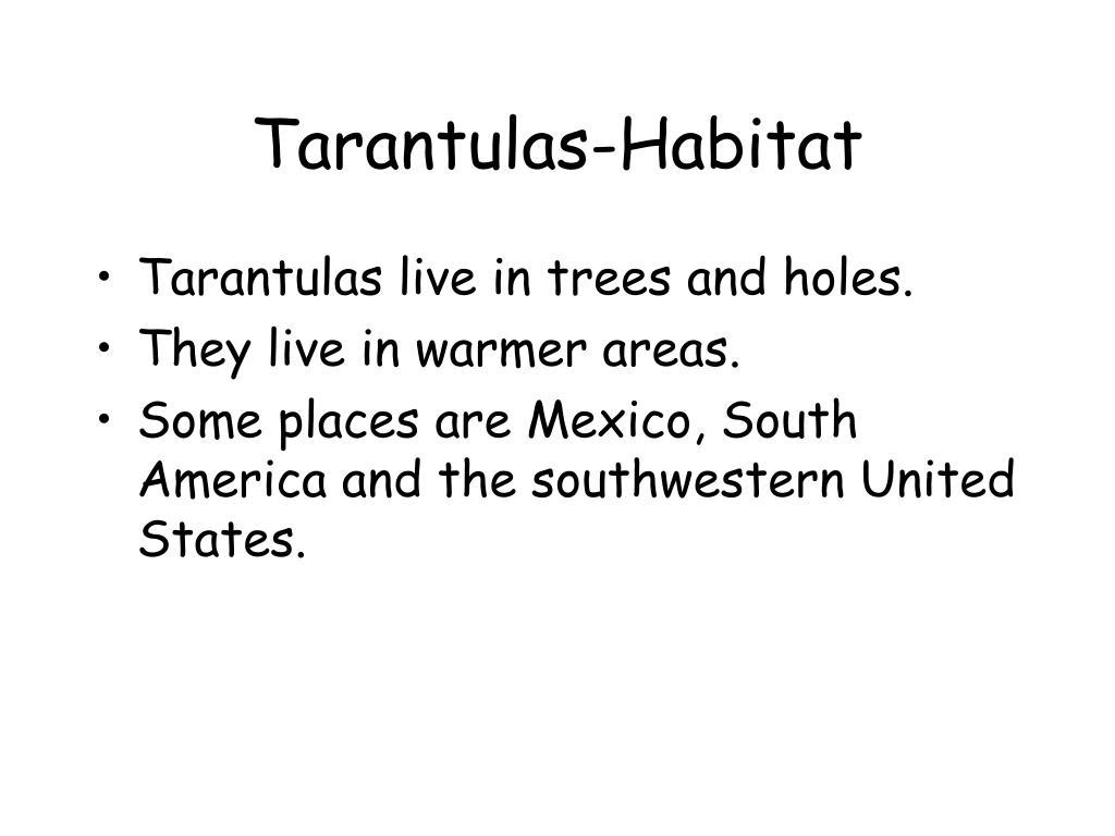 Tarantulas-Habitat